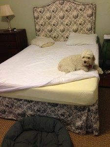 Tempurpedic mattress still great after 10 years